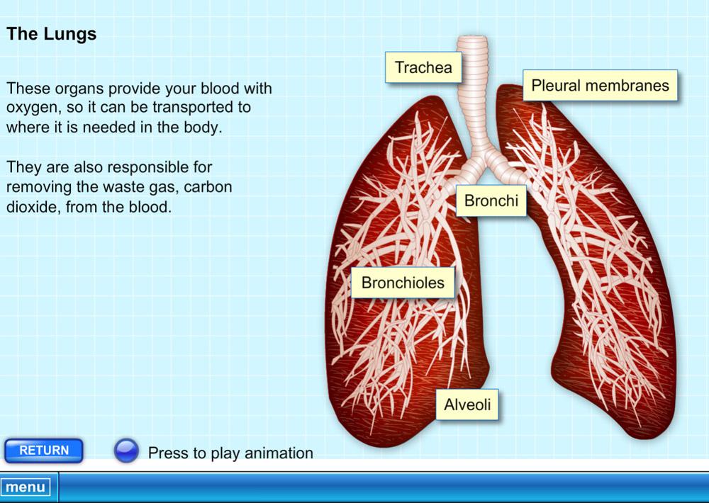 Interactive Biology Software - Human Body Explorer