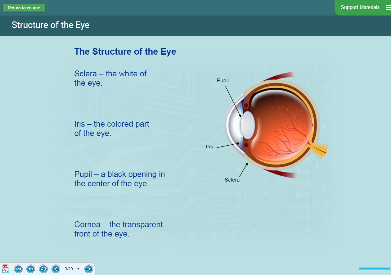 Biology Software - Human Eye Presentation