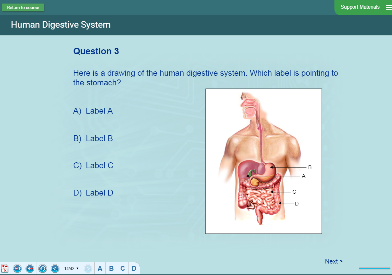 Biology Lesson - Human Body Presentation
