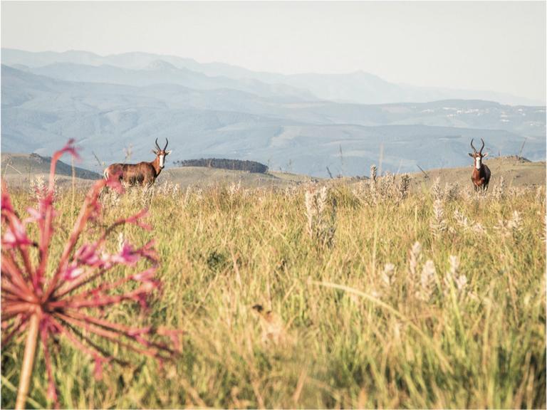 malolotja-nature-reserve-swaziland-tyson-jopson.png