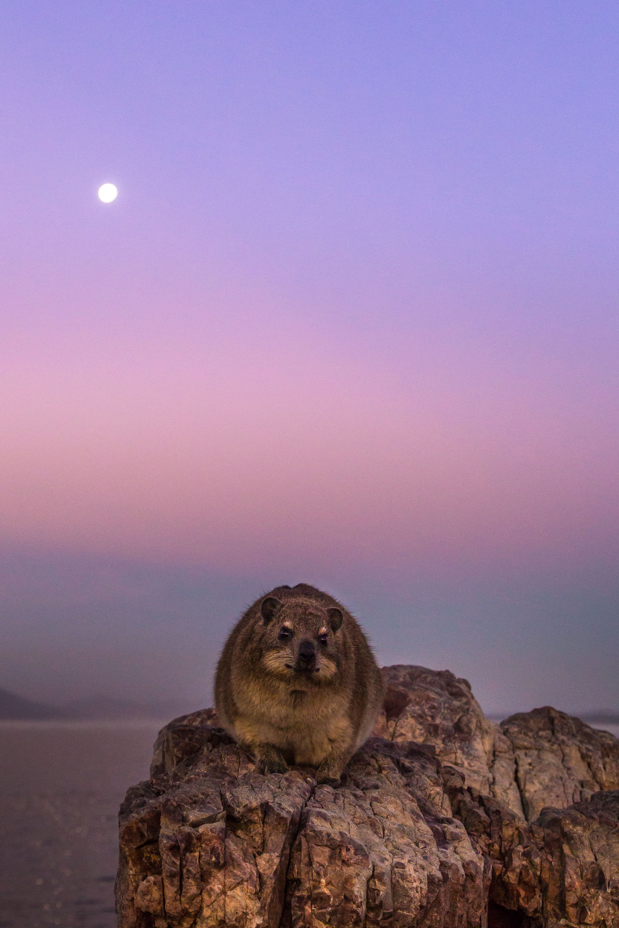 dassie-hermanus-western-cape-tyson-jopson-1.jpg