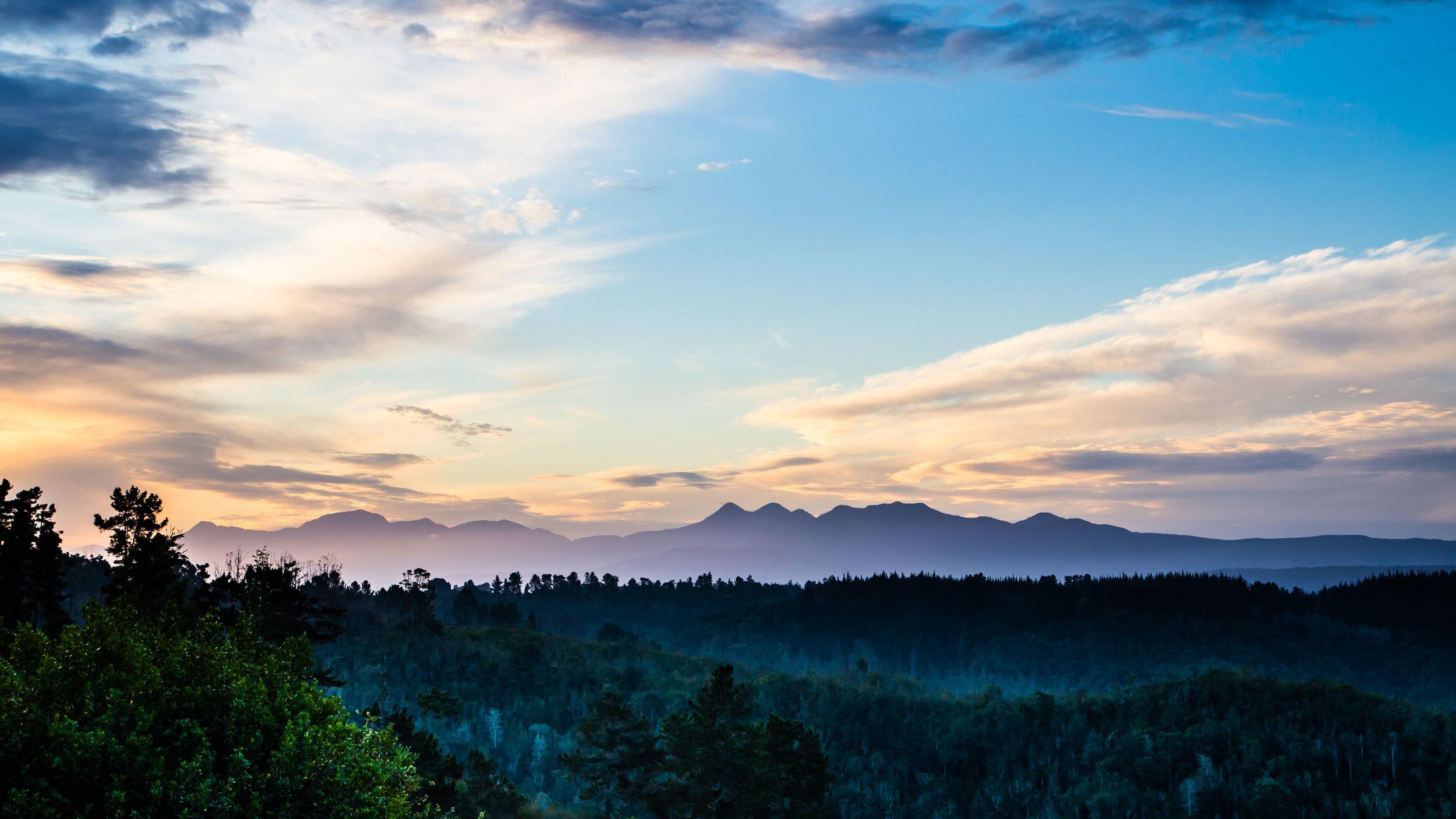 knysna-forest-western-cape-tyson-jopson-1.jpg
