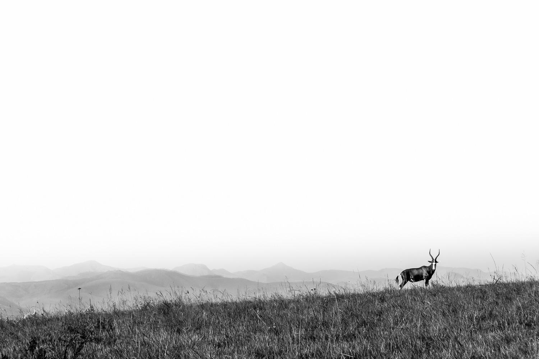 swaziland-tyson-jopson-11.jpg