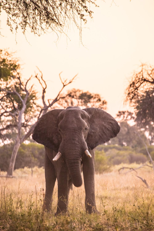 botswana-13.jpg