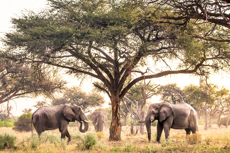 botswana-12.jpg