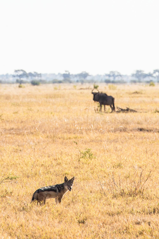 botswana-22.jpg