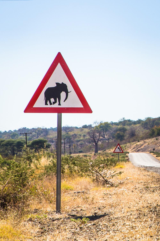 botswana-23.jpg