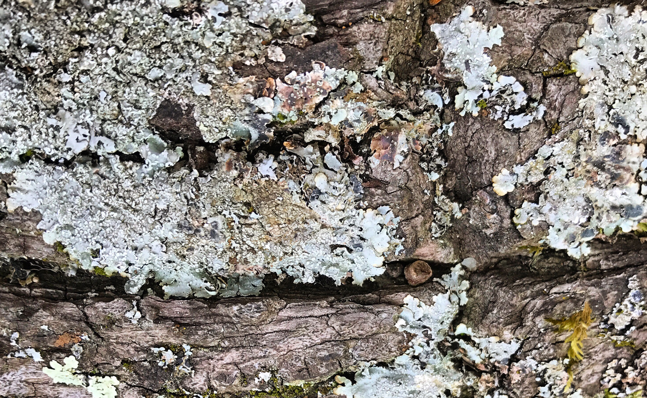 Colour lichen 1.jpg