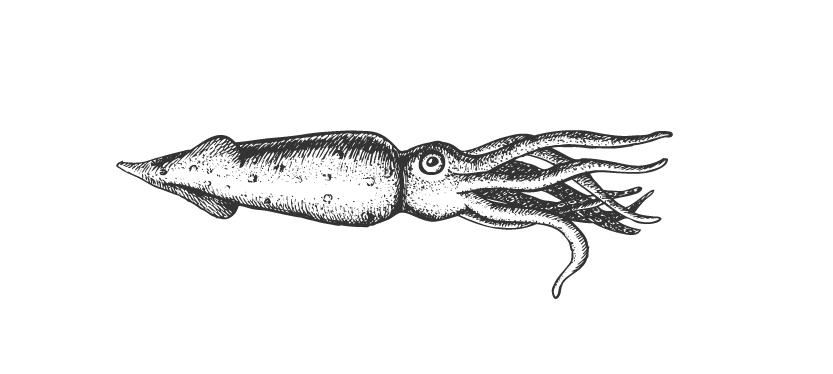 squid-01.jpg