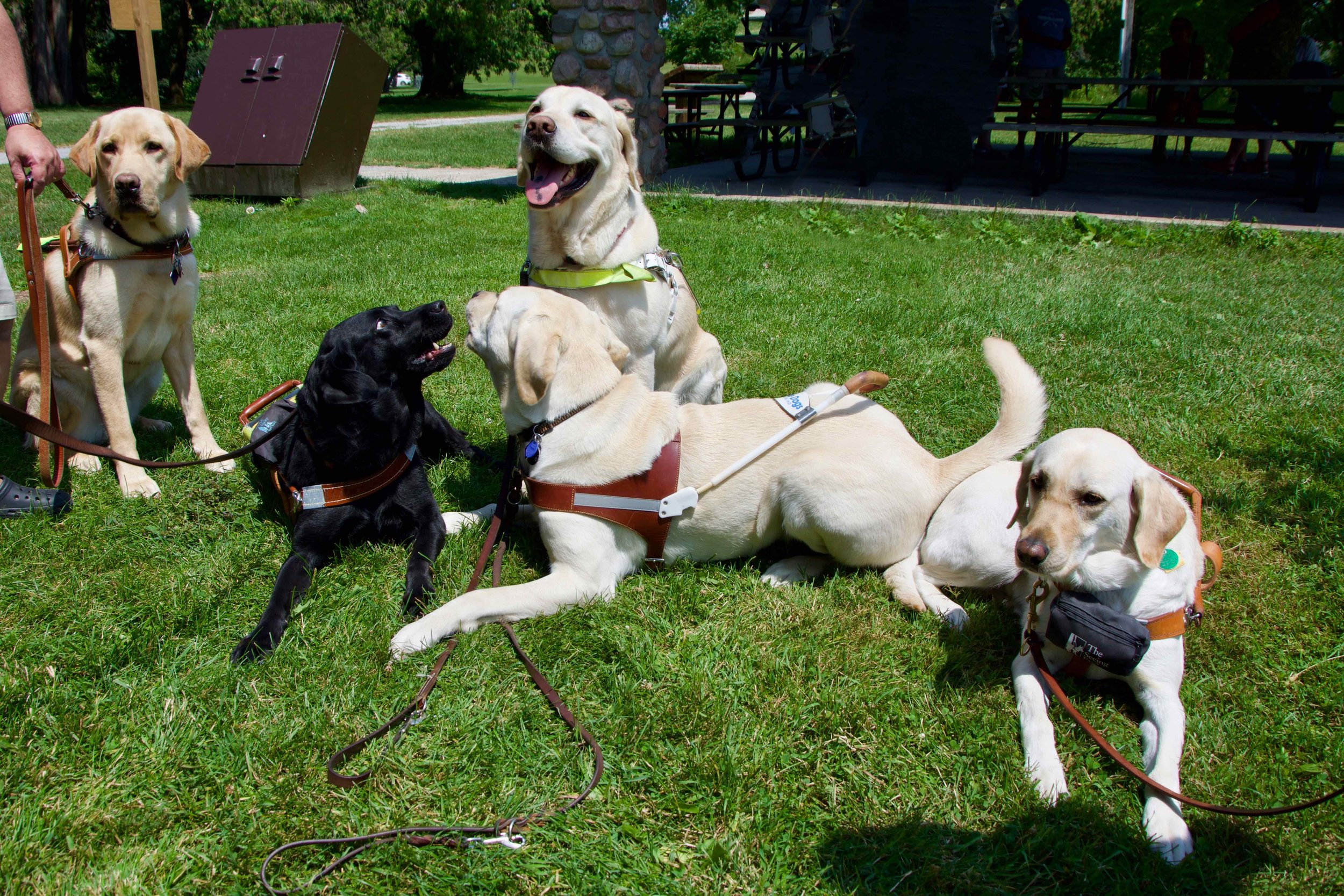 CCB Zoo Picnic - Casey, Frankie & Mixie behaving, Lois & Akira Misbehaving