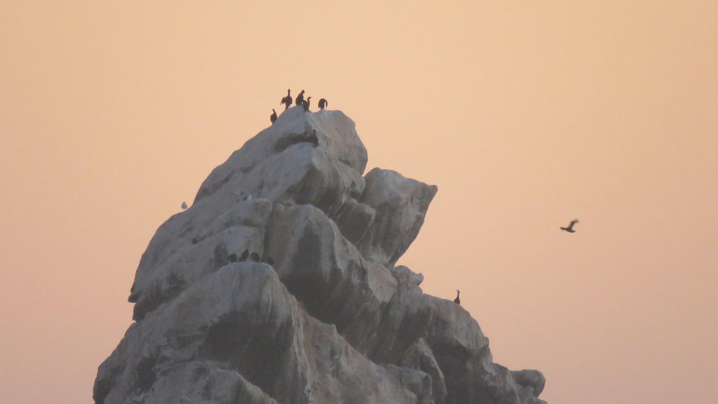 8. Birds on Rock.JPG
