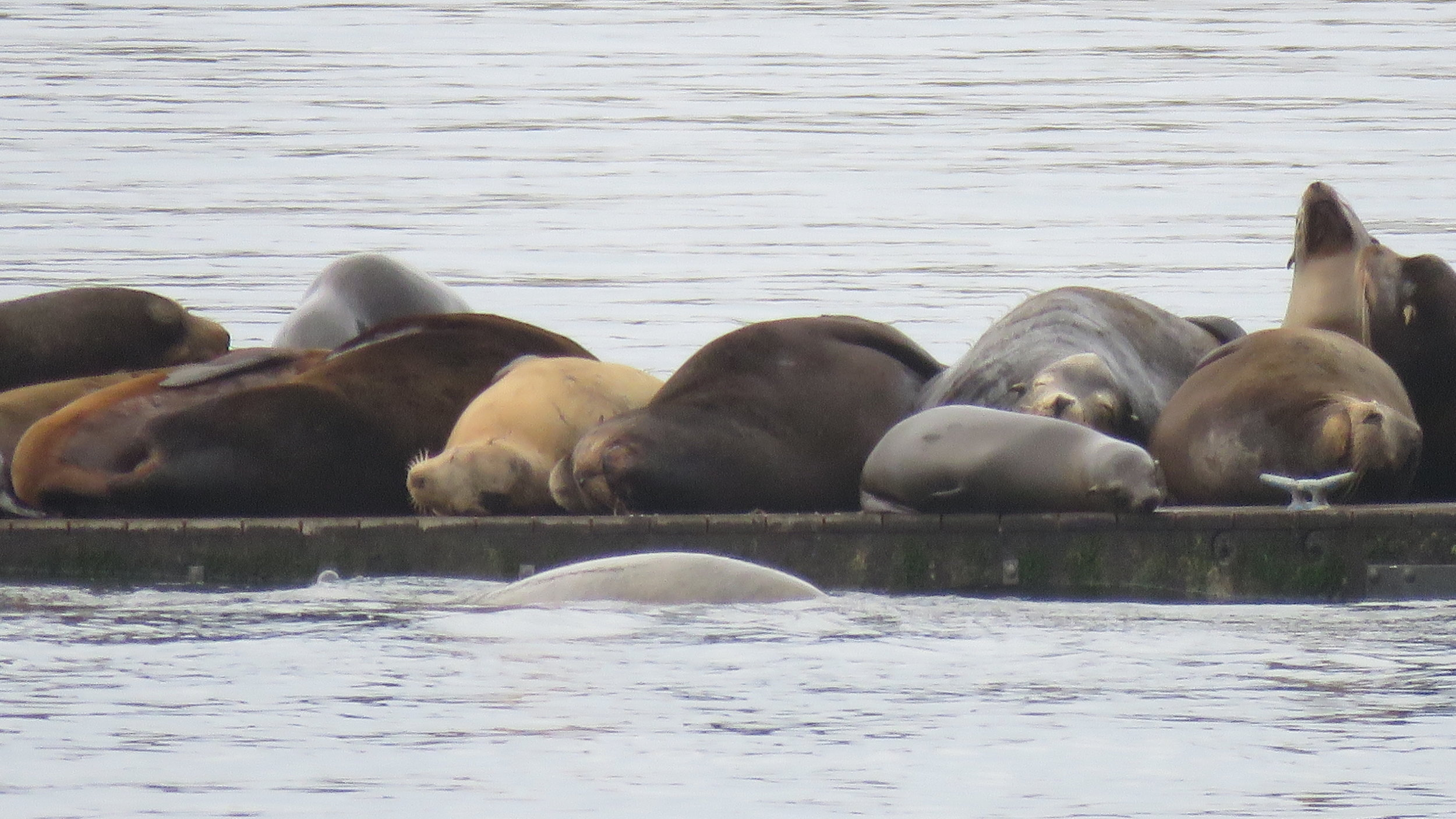 40. Sleeping Sea Lions.JPG