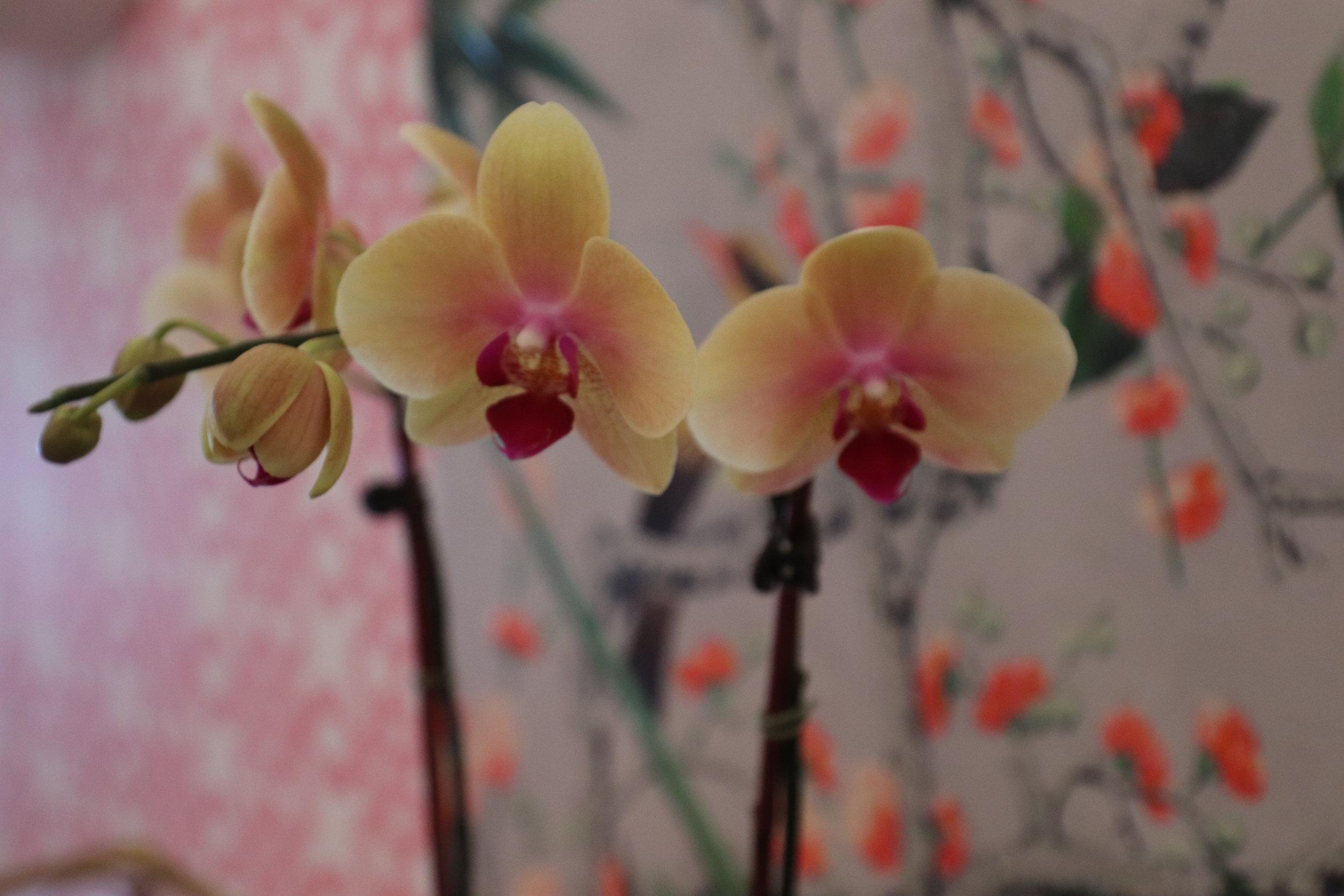 sweet-escape-cottage-paradise-island-lily-pulitzer-orchids-bahamas