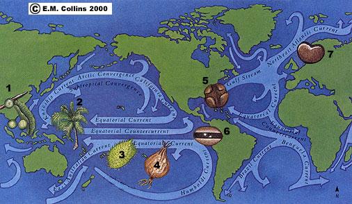 shells-bahamas-sea-drifts-sea-beans-charter-activities-bvi-sweet-escape-yacht-map