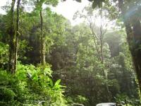 Tropical_forest-200x150.jpg