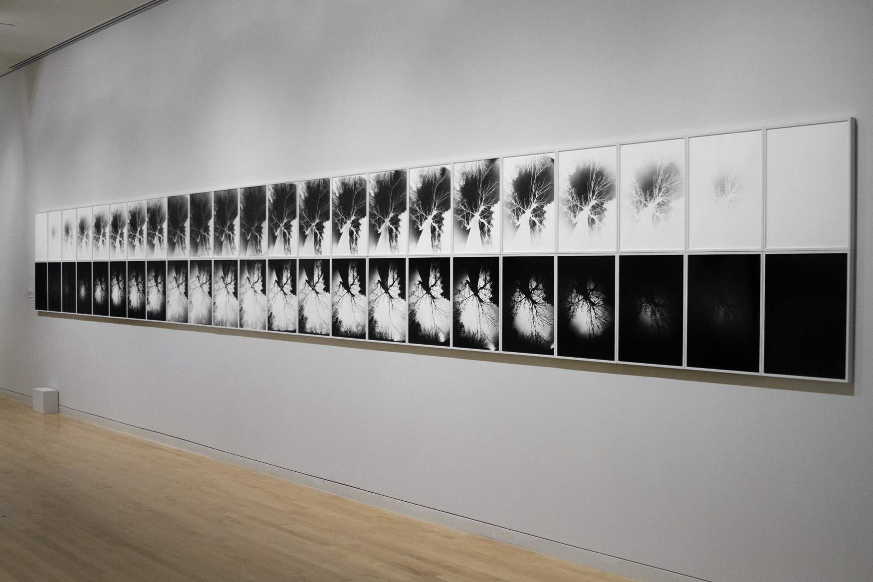 Solstice , 2015-16, 46 gelatin silver prints, installation view at the Georgia Museum of Art, 40.5 x 391 in.