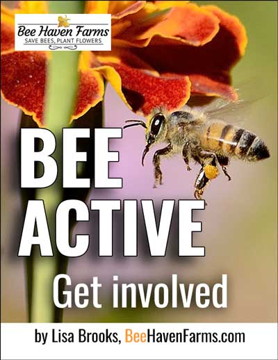 Bee Activism 101 - Join the save-the-bees movement, become a bee activist. Town Hall event flier, bee education flier, plus two Facebook image posts included.