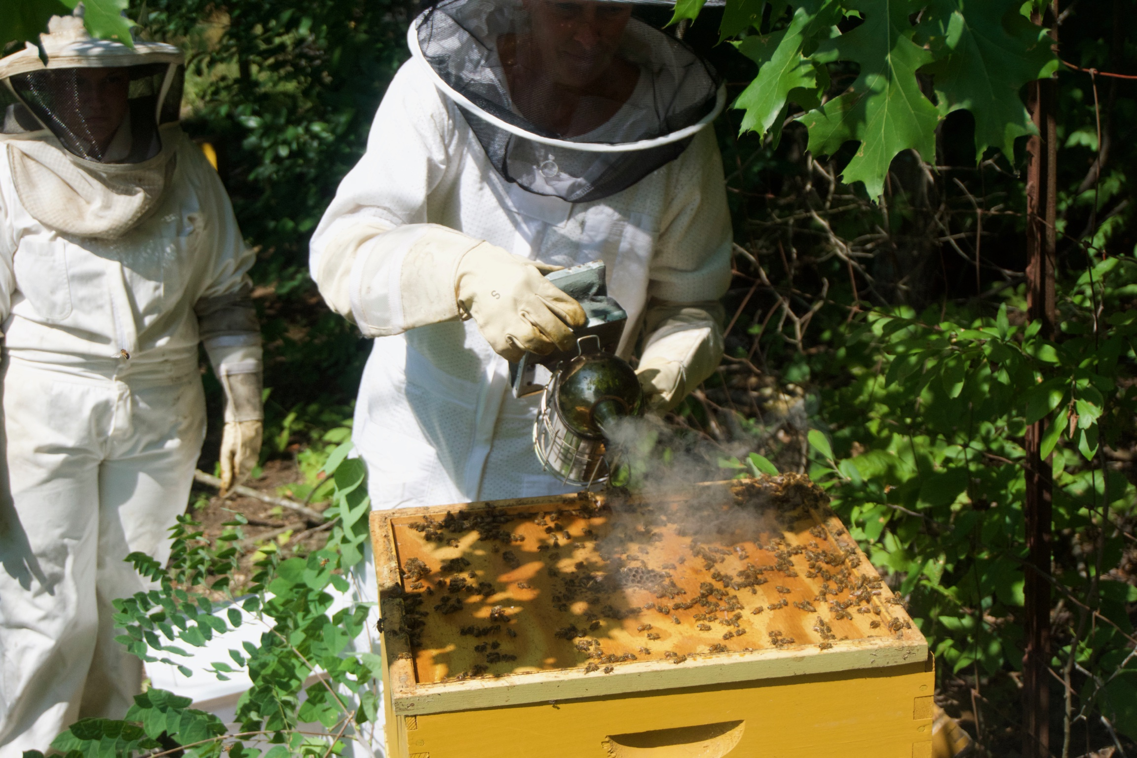 Bee's & Honey - Our three bee boxes sustain our flower garden and farm with their pollinating power! The bees create their honey for the winter, leaving the rest for us to share!