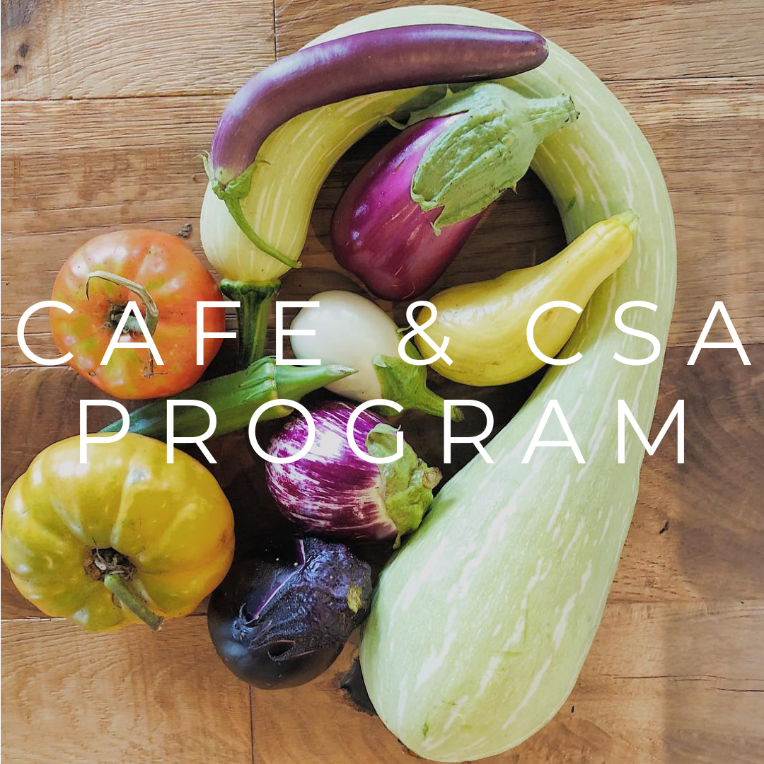 CAFE AND CSA PROGRAM (1).png