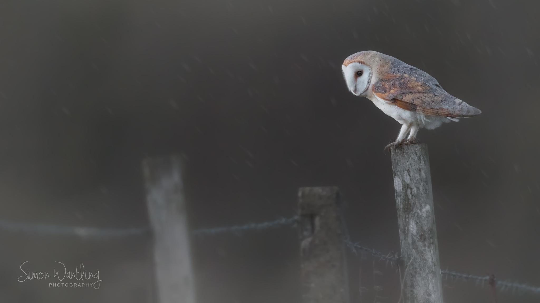 Barn Owl 16 X 9 20th Jan 18.jpg