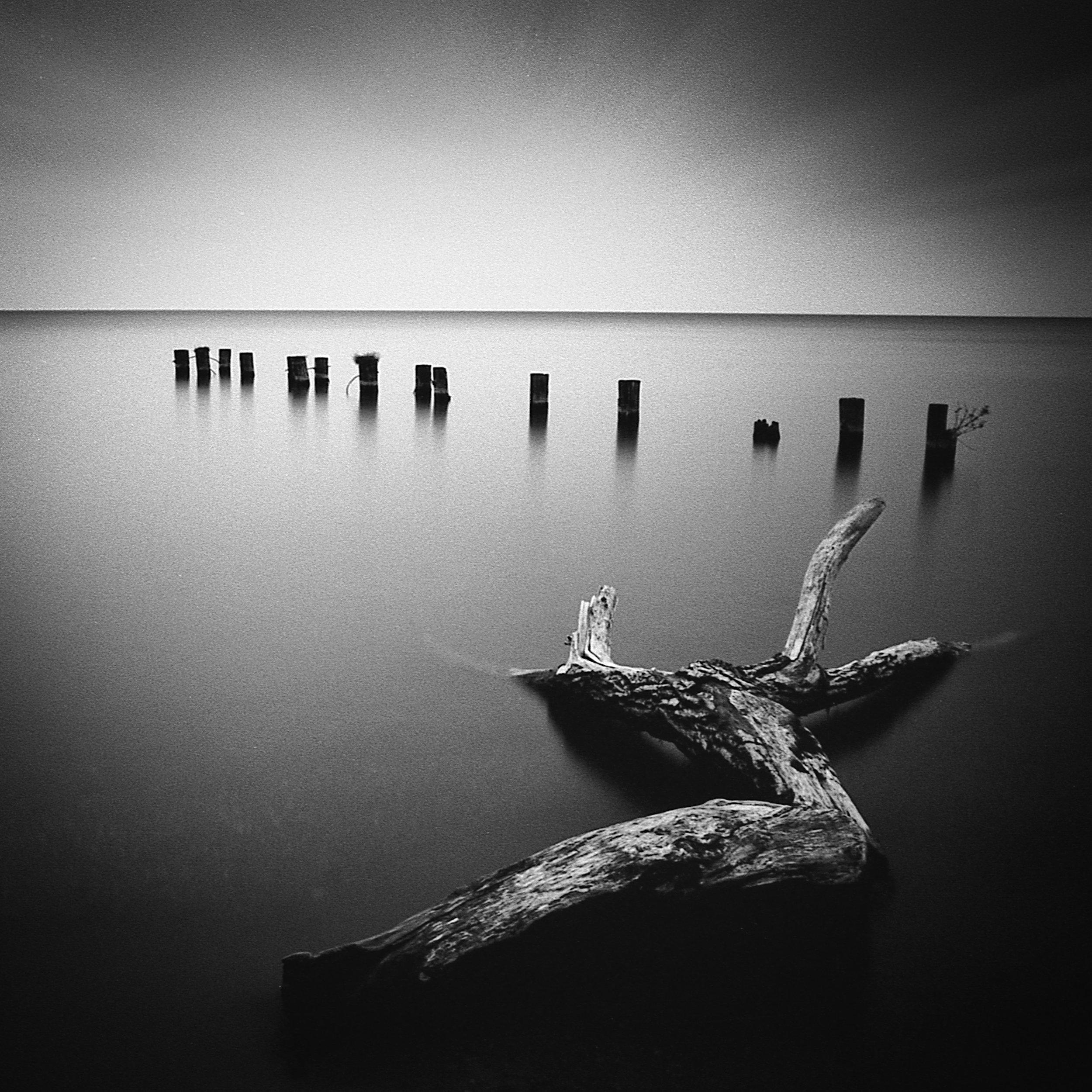 driftwoodand14posts.jpg