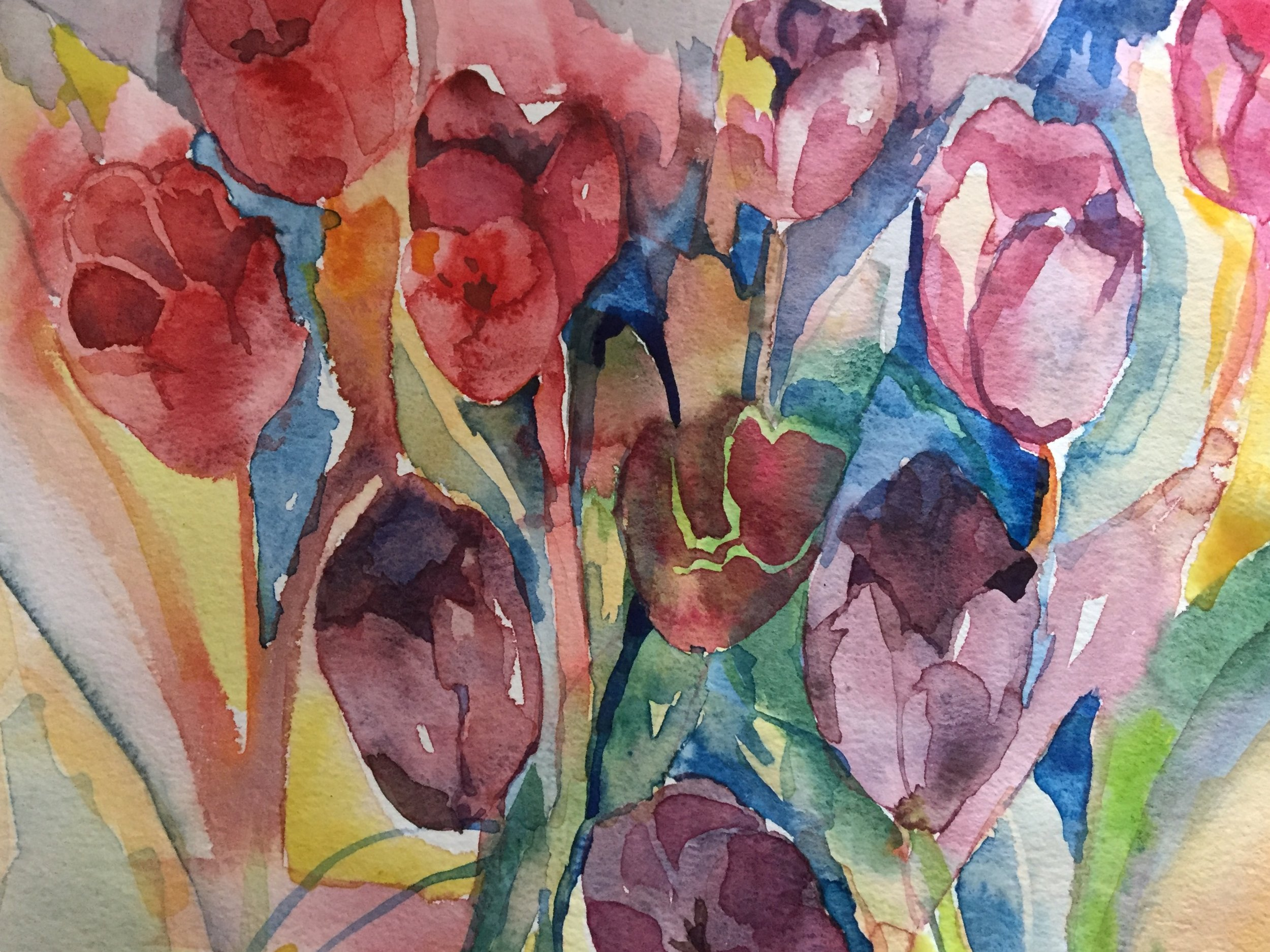 Colour Tulips