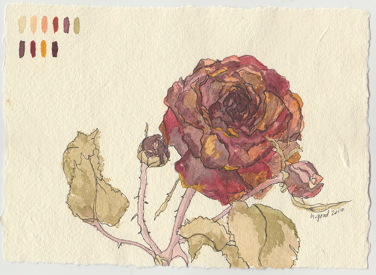 "Dried Rose watercolour and pen on paper 6x8"" $45"