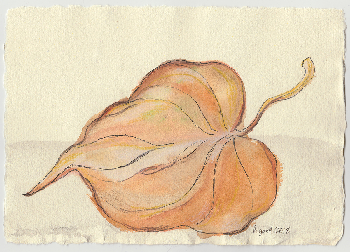 "Dry Leaf watercolour and pen on paper 6x8"" $45"