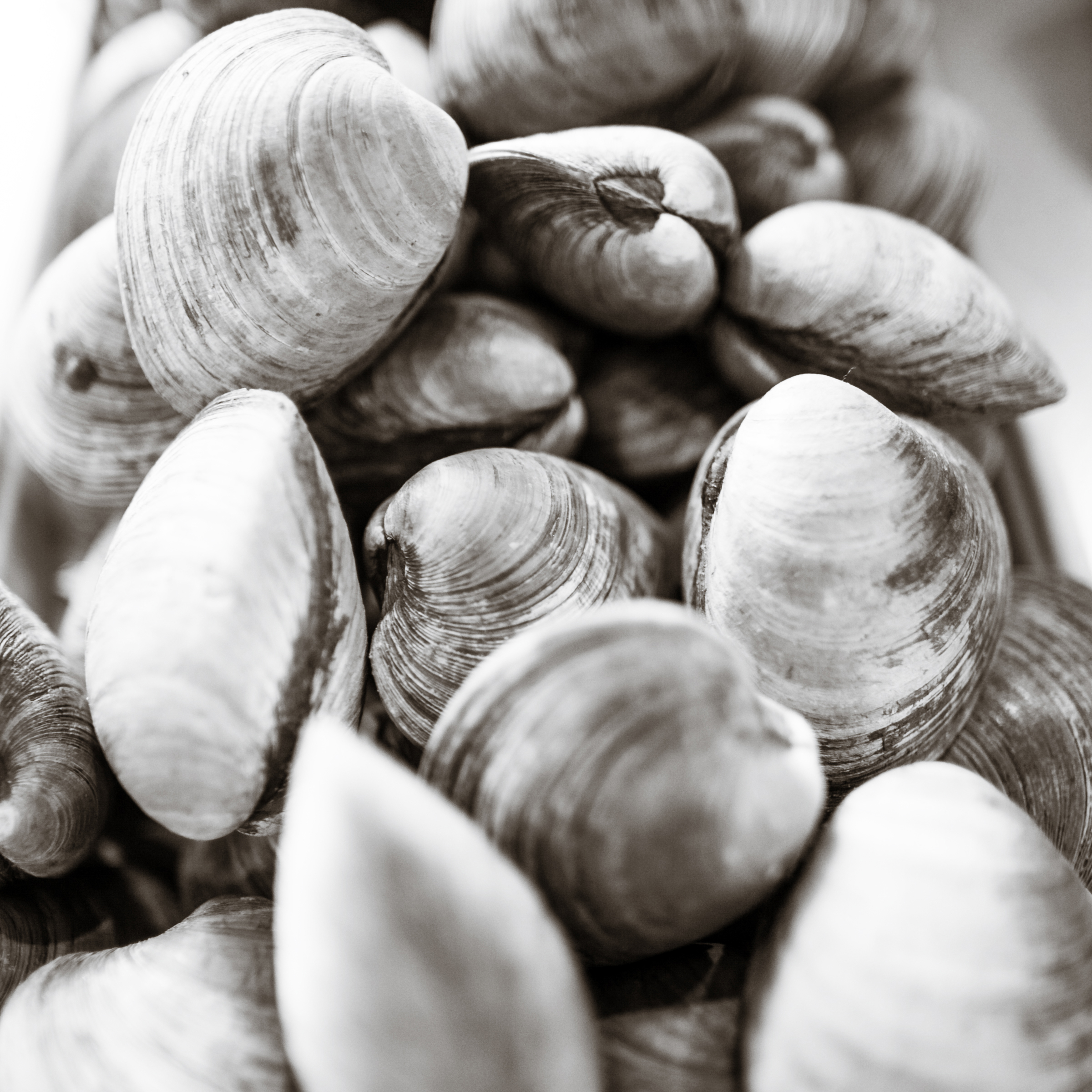 Clams in the fish case at Mud City. Always fresh. Photo: Ann Coen