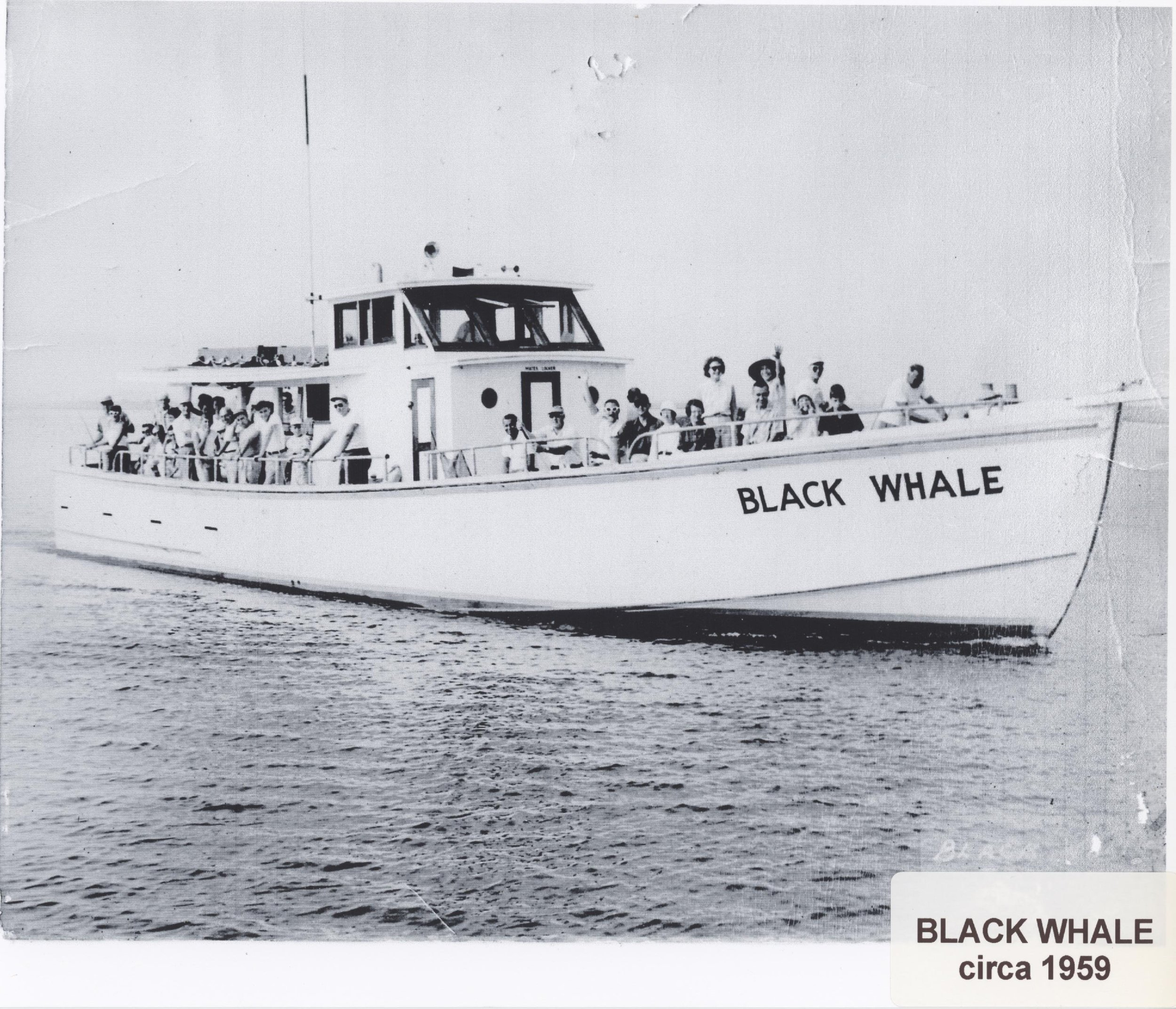 The Black Whale Bar & Fish House is named for the famed Black Whale cruises out of Beach Haven. Our restaurant built on the site of Romeo's. Photo courtesy of New Jersey Maritime Museum.