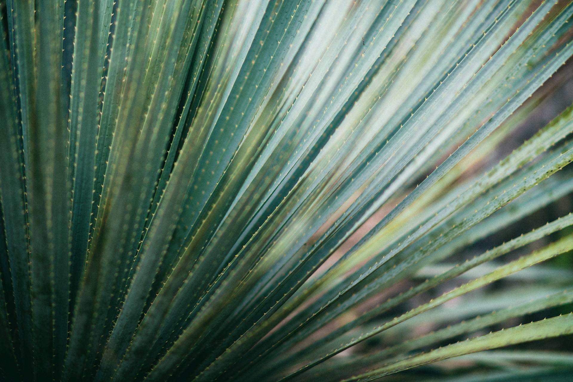 succulent-918657_1920.jpg