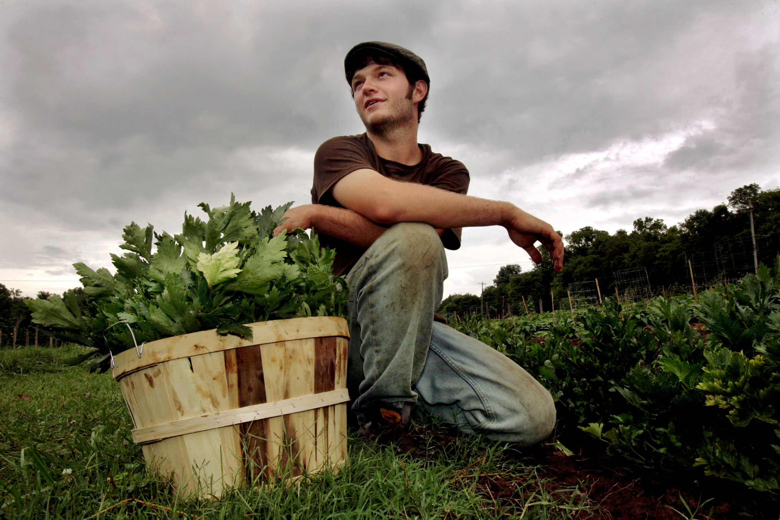 Eric Wooldridge, farm manager at Sulphur Creek Farm, harvests celery outside Nashville, Tenn. The commercial organic farm runs a CSA and sends 50-80% of its harvest to groups like Second Harvest food bank.