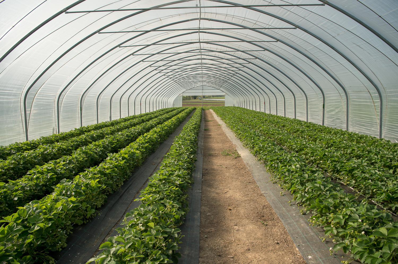 110__S040860_Gilli_Gemüse_Erdbeeren.jpg