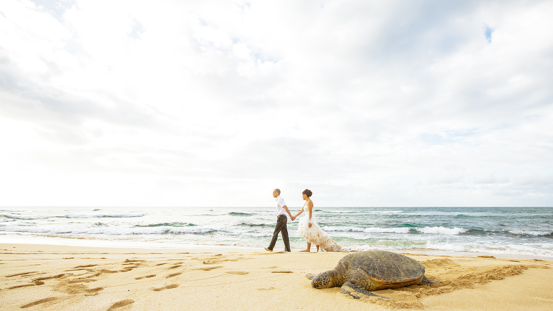 A nice stroll next to the resting turtle on the North Shore of Hawaii.