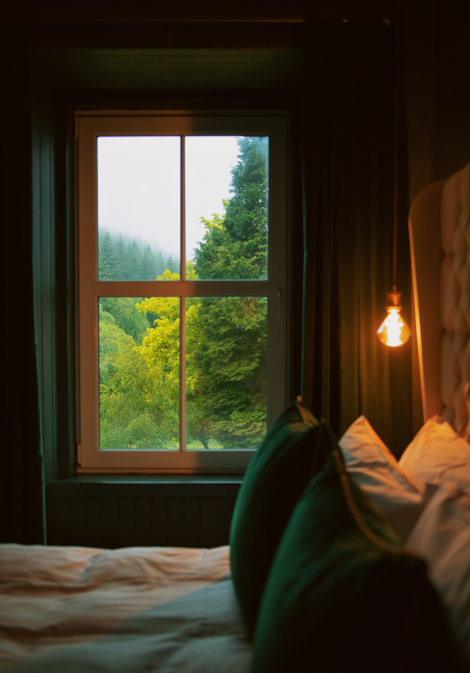 room-1-forest-view