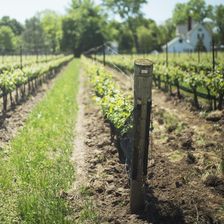 Guided-Toronto-Wine-Tasting-winery-landscape.jpg