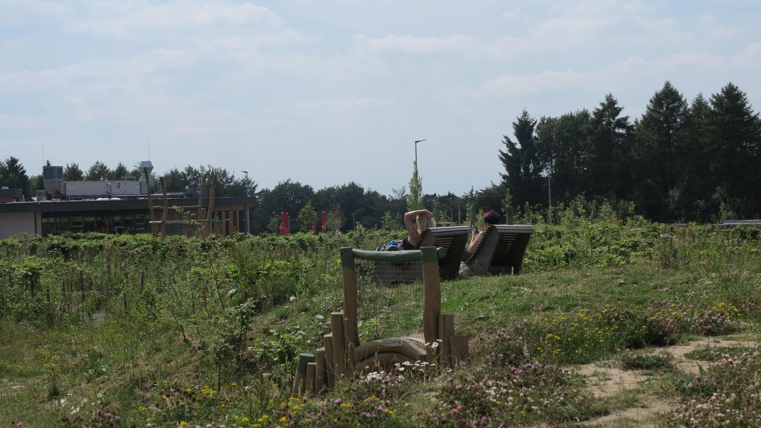 Weite und Wald: Panarbora ist ein idealer Tagesausflug für Familien