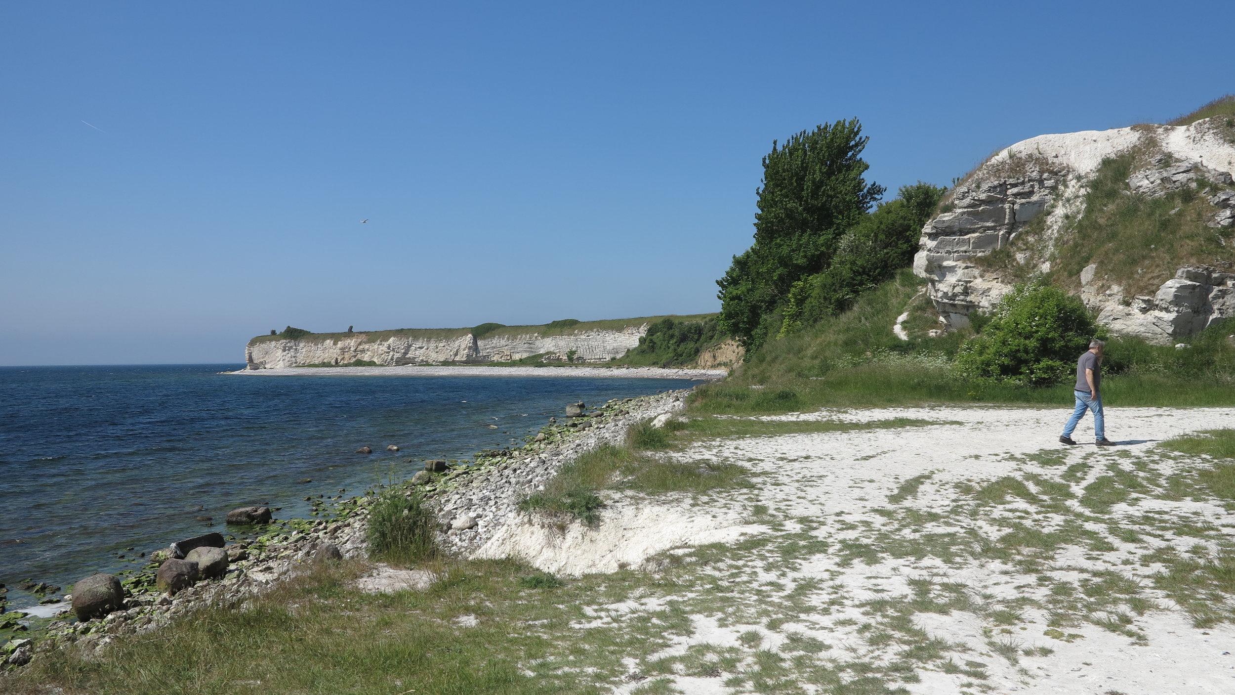 15 Kilometer lang ist der schroffe Küstenabschnitt von Stevns Klint, der von einem Wanderweg mit herrlichen Aussichts- und Infopunkten gesäumt wird
