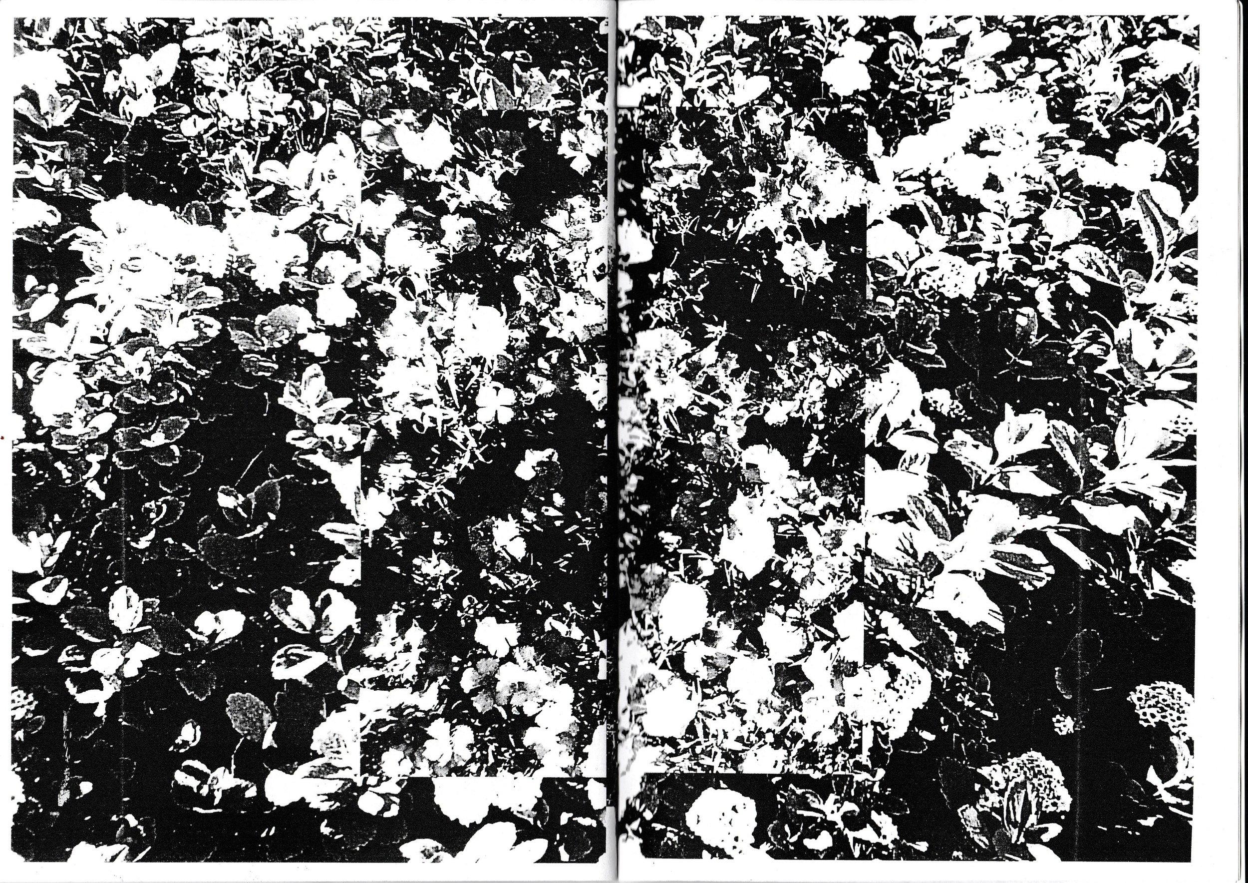 fm 12.jpg