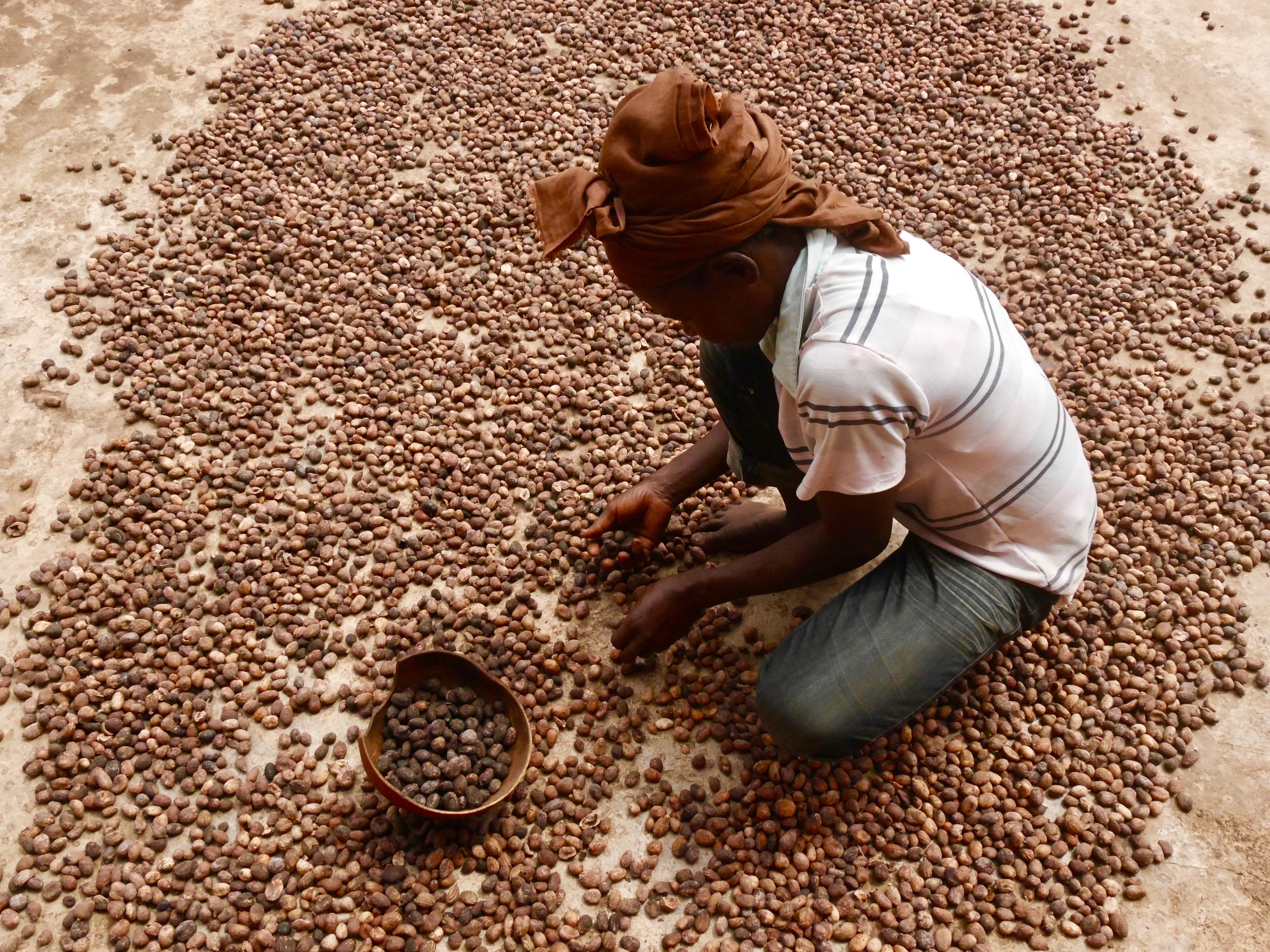 Before you can start the shea preparation the bad nuts need to be carefully picked out of the batch.