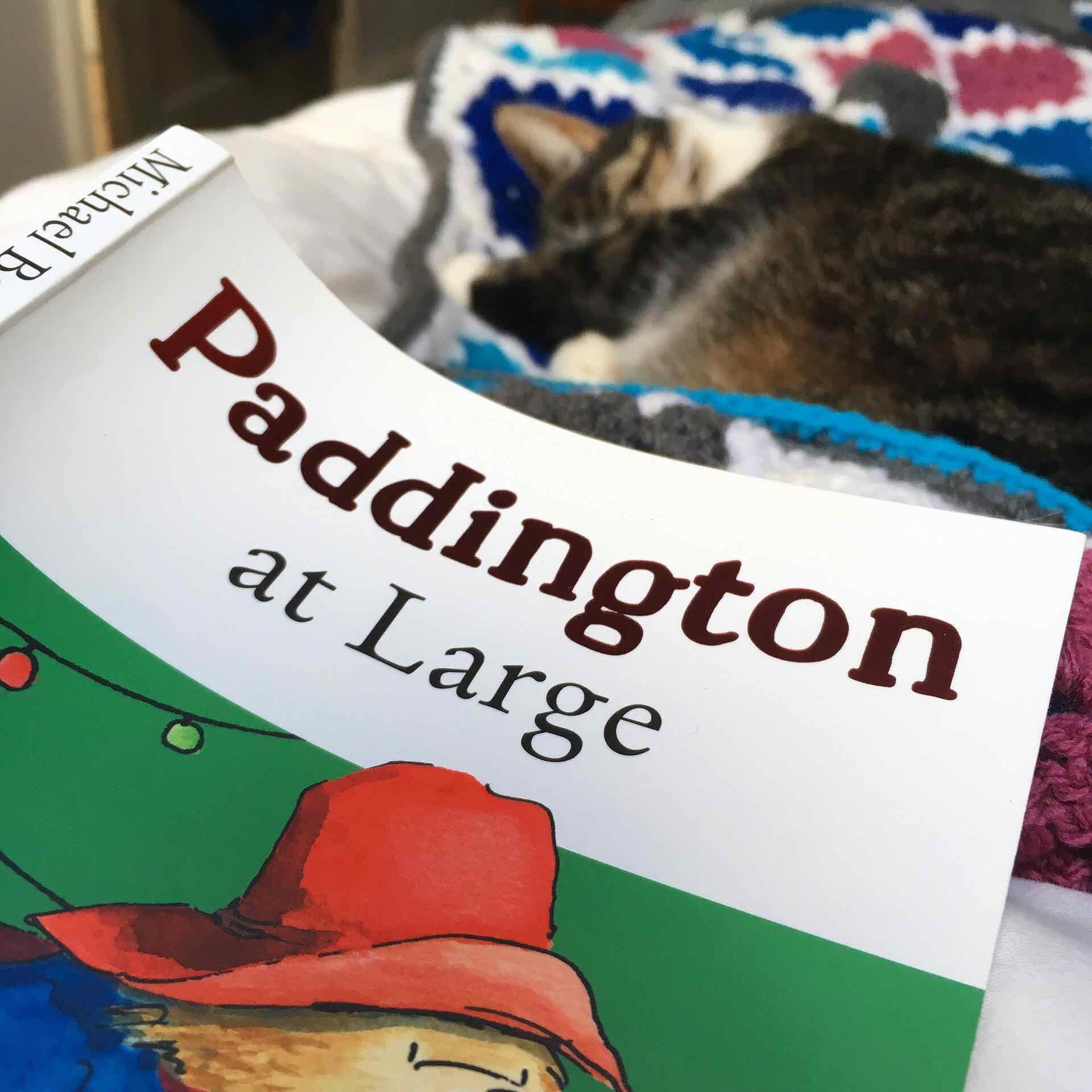 Paddington and napping