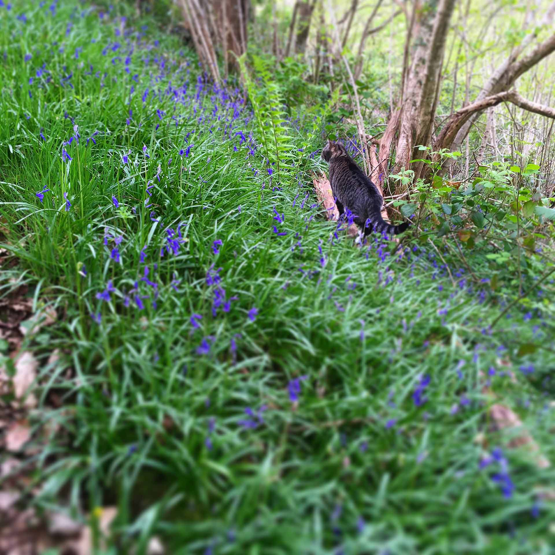 Ounce in the bluebells