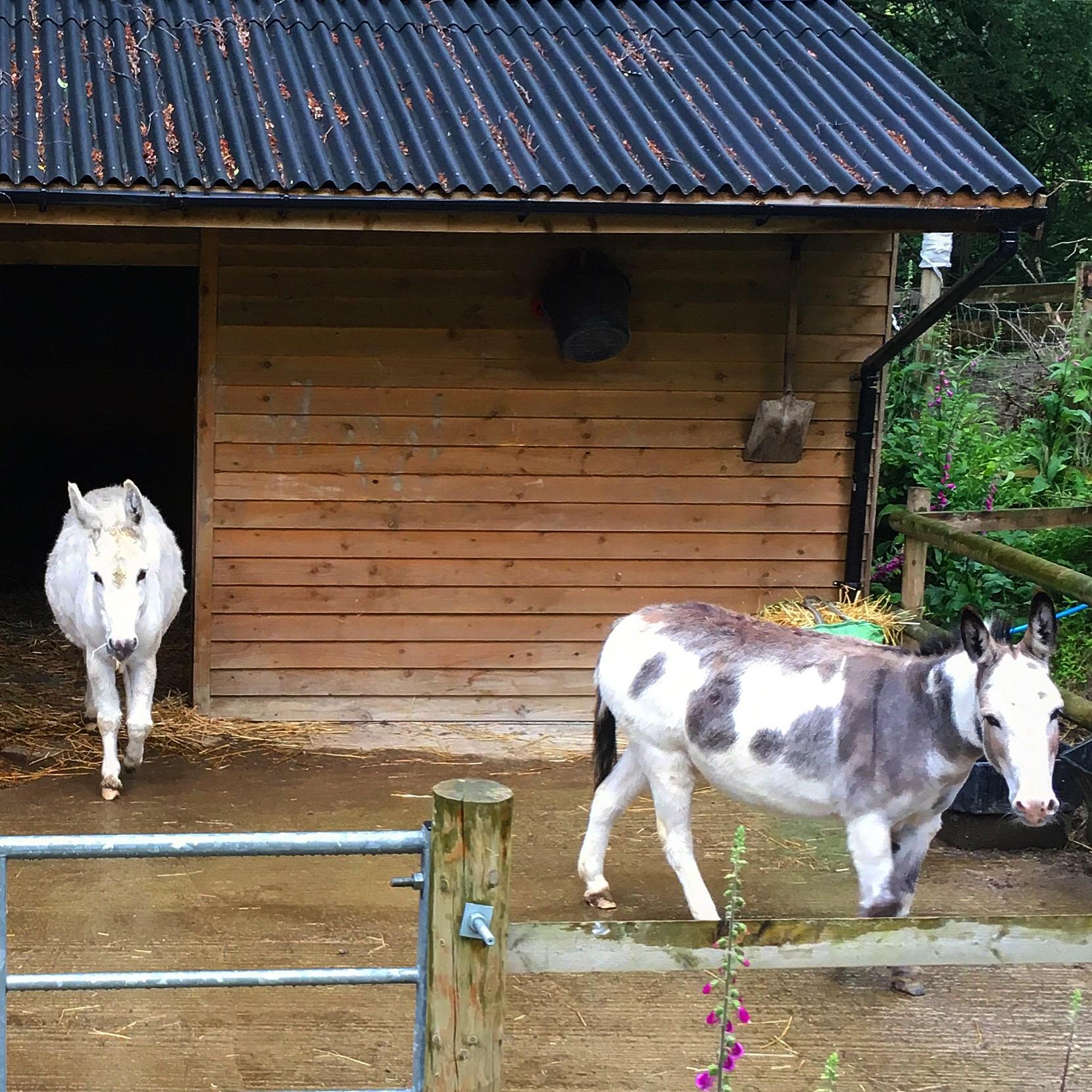 Visiting the donkeys