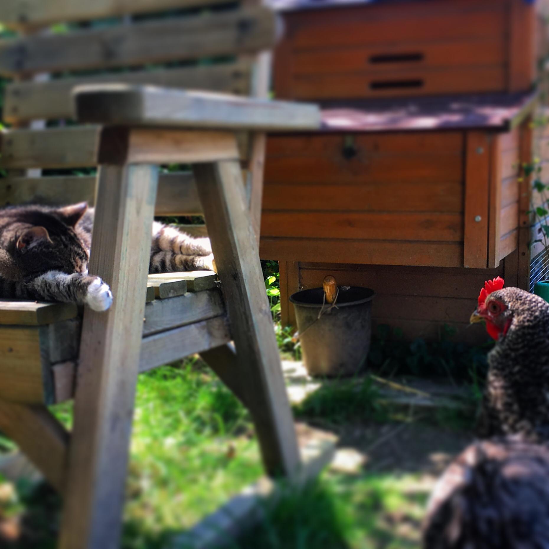 Louise keeping an eye on Ounce