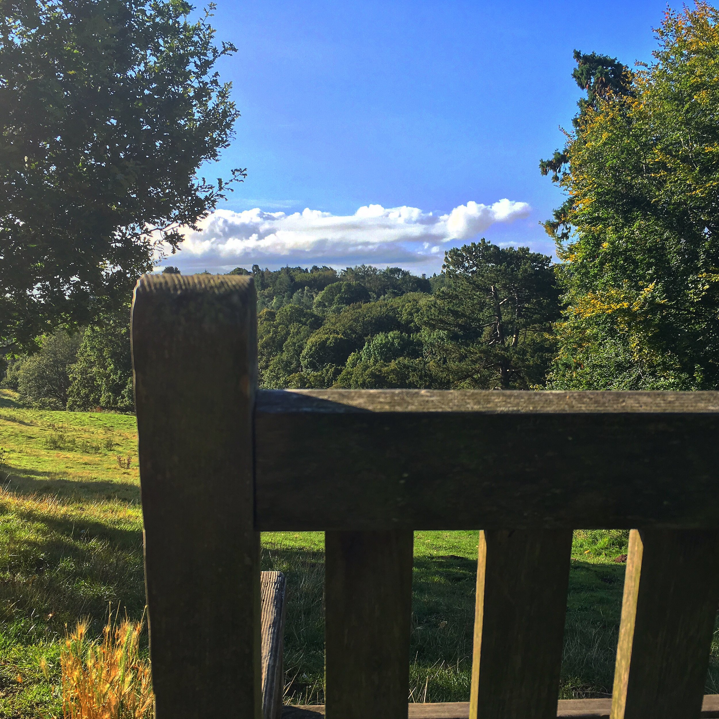 Sunny bench