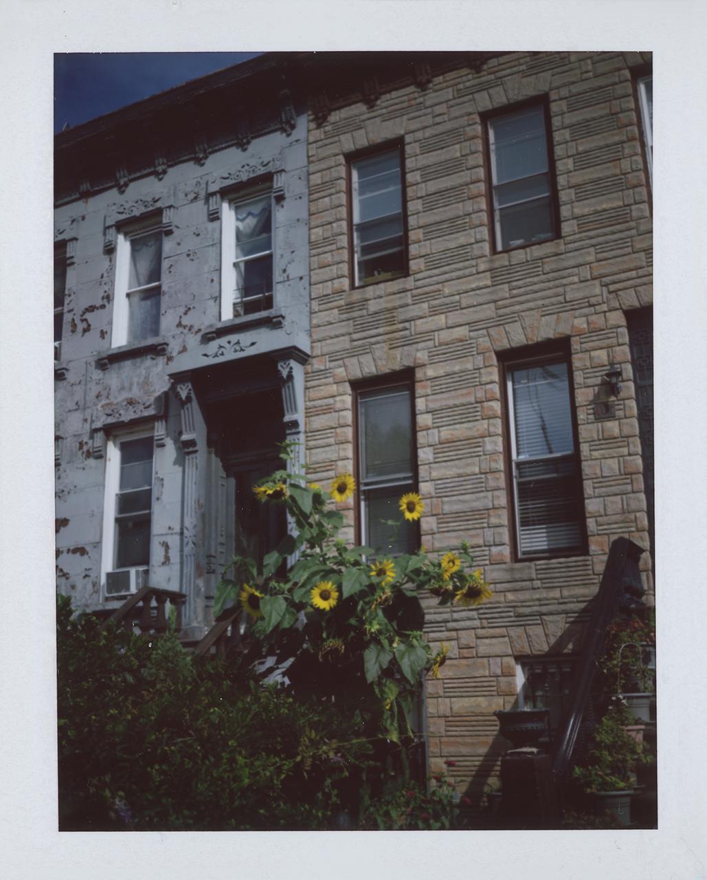 Sunflowers #002