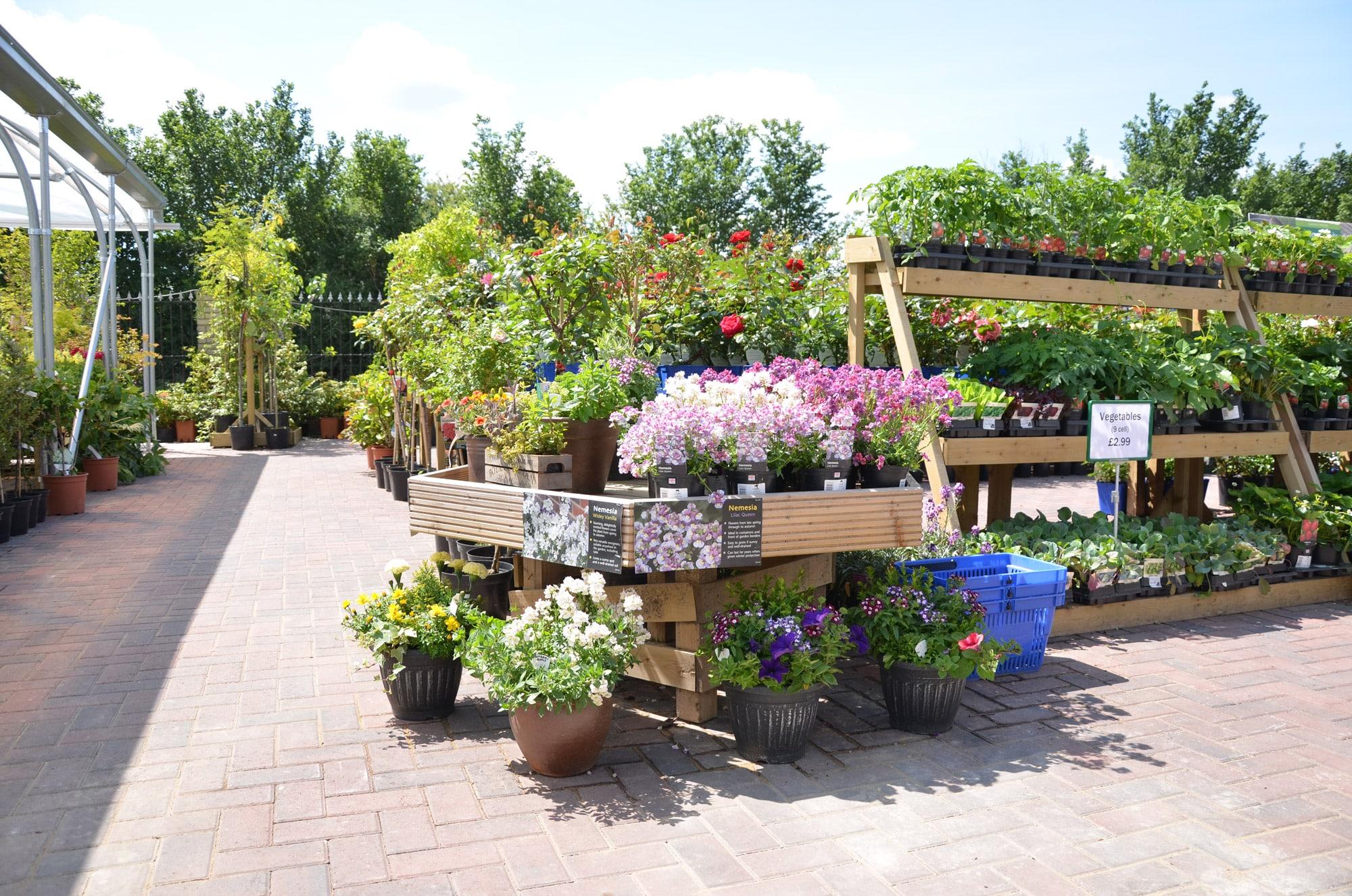 Lower-barn-gardencentre-displayflowers-min.jpg