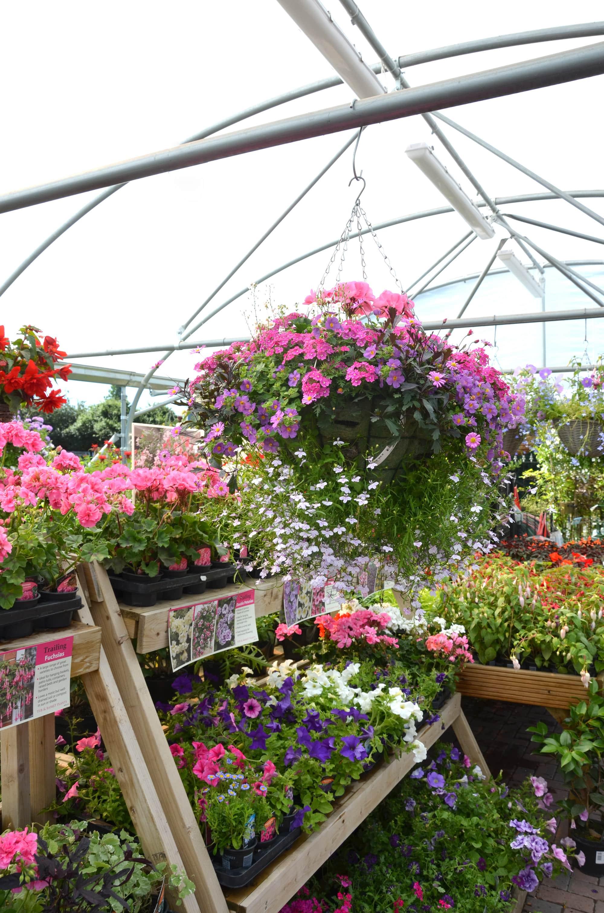 Lower-barn-gardencentre-flowers-min.jpg