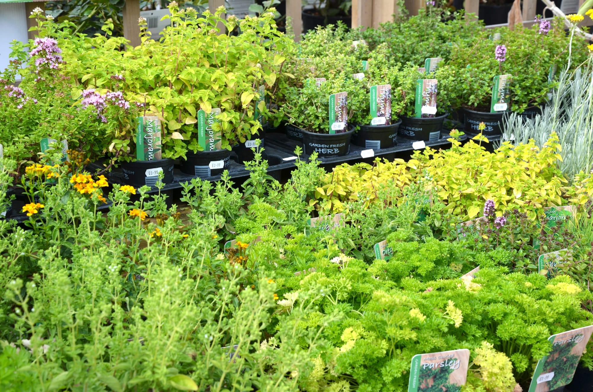 Lower-barn-gardencentre-herbs-min.jpg