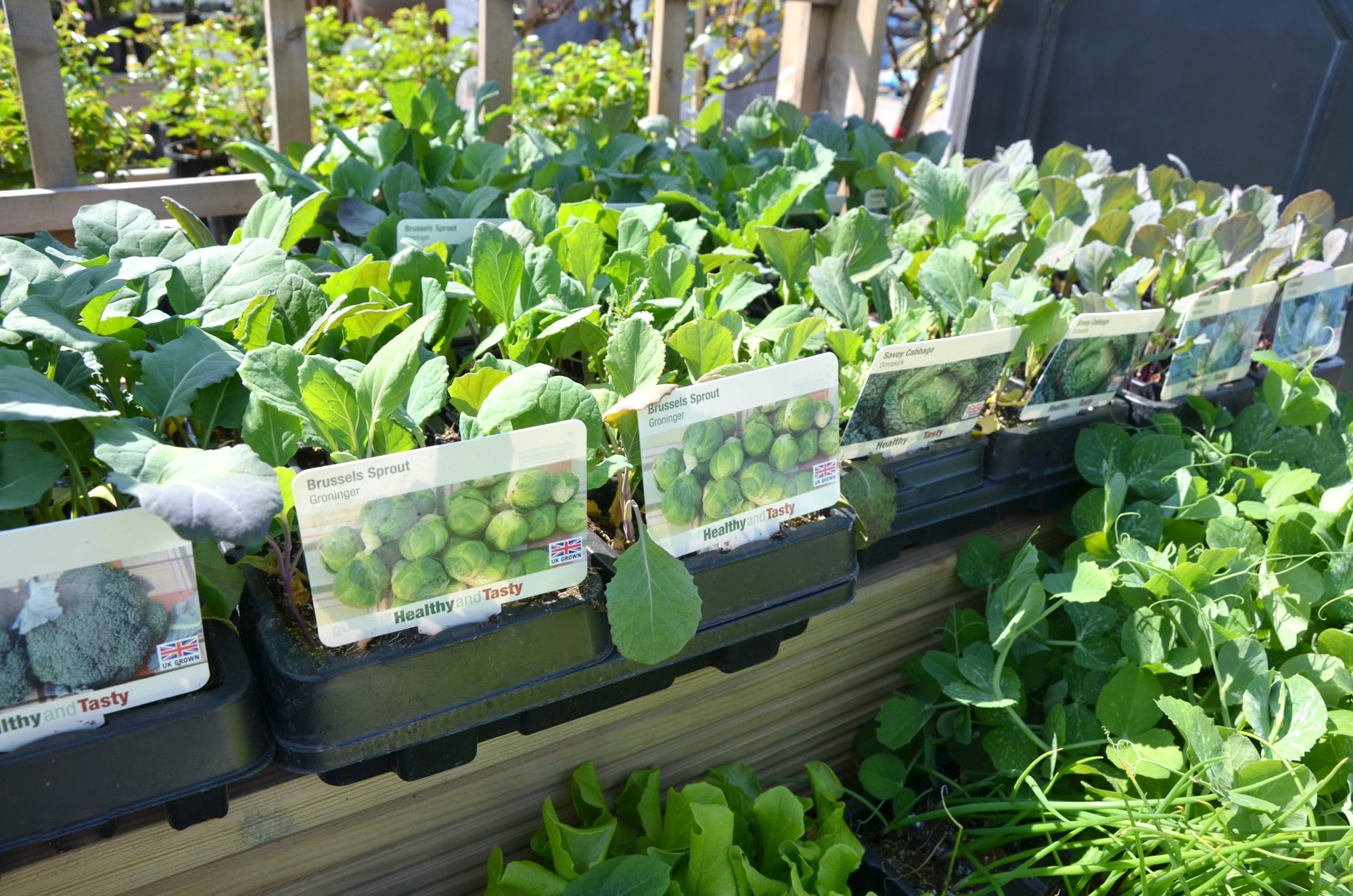 Lower-barn-gardencentre-peas-min.jpg